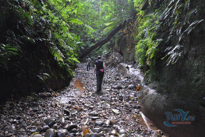 Экскурсии в национальный парк мадиди можно заказать многодневные (от двух до семи дней) и однодневные