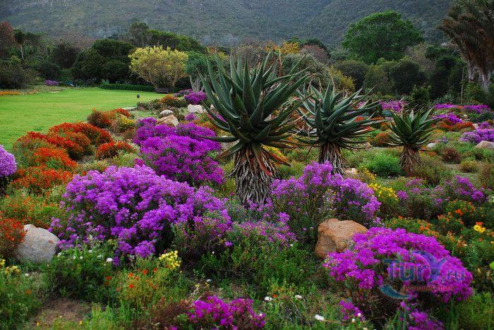 Цветы сады мира